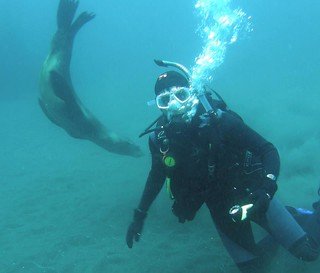 Seals and Divers are the Closest of Companions