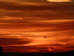 Céu em chamas (IgorCamacho) Tags: autumn sky bird nature paraná brasil clouds sunrise landscape fire natureza pássaro paisagem céu southern cielo nuvens fogo amanhecer outono sul cirrus