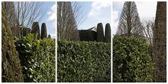 ootmarsum 8 (beauty of all things) Tags: netherlands triptych niederlande hedges ootmarsum triptychon hecken