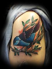 bird coverup final