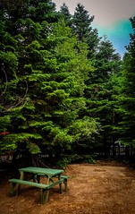 Eco (zeyneperdomu) Tags: trip travel trees tree nature forest turkey woods trkiye bursa lightroom photograpy uludag note5