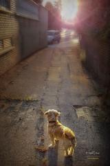 (193/16) Una luz al final del camino (Pablo Arias) Tags: pabloarias espaa spain hdr photomatix nx2 photoshop texturas sol resplandor nana perros paracuellosdejarama madrid comunidadautnomademadrid contraluz