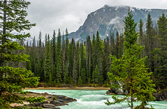 kicking horse river in yoho NP - BC, canada 2 (Russell Scott Images) Tags: canada britishcolumbia bc canadianrockymountains yohonationalpark kickinghorseriver