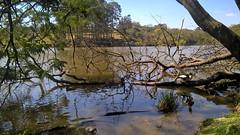 PAAAAAAAAAAAAATOS ( NEKO) Tags: park parc parque parquedocarmo arlivre sopaulo zonaleste sunny natureza lindo nature mataatlantica ducks patos sp lumiacam sepe itaquera fazendadocarmo