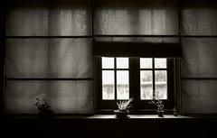 XinTianDi_windowShade (Charles R. Yang) Tags: window curtain blinds plant chinese asian mood bw leica elmaritmasph asph 28mm streetphotography nikcollection silvereffexpro iridientdeveloper