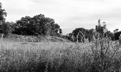 (calemarie137) Tags: ogden utah field water tower blackandwhite landscape summer edit