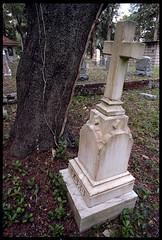 As the tree grows, the stone tilts. (FreezerOfPhotons) Tags: graveyard headstones graves nikonf portra160 24mmf28 freshfilm homec41 epsonv600 ishootfreshfilm homecolorprocessing