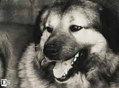 Happiness (Danny 666) Tags: dog mydog buddy mybuddy mansbestfriend