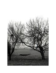 Falling forever (Salva G.) Tags: olympus pen ft fzuiko 38mm f18 ilford hp5 plus 400 scanned negative 35 35mm film pellicula pelicula analog analogue halfframe singleframe tree nature fog misty blackandwhite blancoynegre bn bw blackwhite blackandwhitephotography lights shadows lightsandshadows