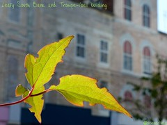 Leaf and Trompe-L'il, Gabriels' Yard (sciencebase) Tags: london siteseeing summer city