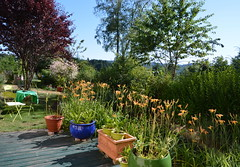 DSC_0975-1 (Chaumurky) Tags: h garden