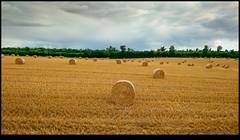 160713-9659-XM1.jpg (hopeless128) Tags: france strawbales haybales fields sky eurotrip 2016 field clouds bioussac aquitainelimousinpoitoucharen aquitainelimousinpoitoucharentes fr