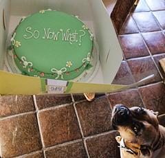Bella is interested in Susan's Birthday Cake (shadowplay) Tags: sonowwhatbelladogcakefocuspaying attention possibilities princesscake
