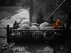 Rotten apples (Aga Dzięcioł) Tags: apples rottenapples rotten rot autumn fall bench applebox garden jabłka jesień polska łochów poland homegrwon death decay