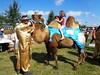Jumpin de weel (Omroep Zeeland) Tags: rondje rijden op een echte kameel