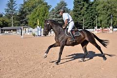 DSC_0862 (2) (ploufjf_64) Tags: paus show jumping chevaux pau 2016