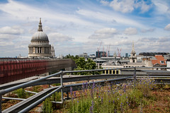 Eversheds-Roof-Garden-12 (Out To The Streets) Tags: 2016 evershedsroofgarden flowers june2016 london opengardens opengardens2016 stpaulscathedral architecture blue buildings cathedral church cornflowers dome grass green metal skyline white wildflowers
