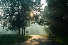 Rays of sun @ Nieuwer Ter Aa (PaulHoo) Tags: sun fog morning summer nieuwer ter aa holland netherlands lumix 2016 mist sunray ray road street polder