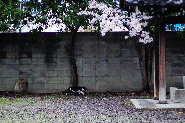 Today's Cat@2015-04-04