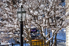 Not Cotton Candy (Don3rdSE) Tags: winter snow cold tree ice weather canon eos march pennsylvania freezing pa 5d canon5d frigid sleet 2015 don3rdse 3rdsiblingphotography wildcherryknoll