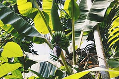 Norra Goa india (Say Hello to my new Friend :)) Tags: nature canon indien bilder gogoa semesterbilder