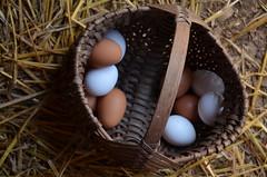Found Eggs.