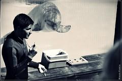 Delfines (Miguel Puerta) Tags: travel parque bw naturaleza byn nature animals fauna marina canon blackwhite dolphin bn adventure viajes animales malaga aventura benalmadena delfinario 2015 selwo ef2470 mpuerta