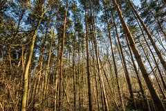 Grass of the Giants (photographyreality) Tags: uk green nature forest nikon photographer wide d750 16mm instagram