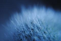 DSC_0700 (Abbruxiau) Tags: pianta grassa plant flower fiori macro passione closeup