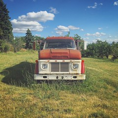 Drive (mediafury) Tags: vintage ford truck vineyard field atwater senecalake fingerlakes old red model grass weather sunny symmetry balance catchy colors