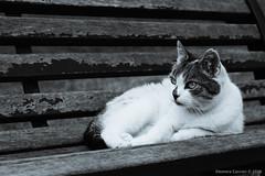 Micia (Eleonora Cacciari) Tags: micia micio gatto occhidigatto occhi eye eyes kitty kitten cat gatta gattina fotografia fotografiadianimali eos1200d eleonoracacciari emiliaromagna ecacciari canon canoneos1200d canonefs18135mmf3556isstm reflex animale animal animaletto blackandwhite biancoenero bn bw