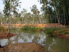 Sonajhuri forest Khoai (Weekend Destinations) Tags: khoai shantiniketan sonajhuri santiniketan bolpur