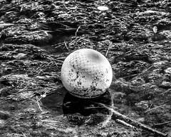 Abandoned Child's Play (that_damn_duck) Tags: bw childhood ball blackwhite