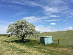 Russian Olive (Rock Water) Tags: sky cloud rural landscape bucolic russianolive
