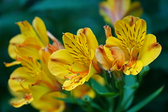 2016.07.014 Abbotsbury (7) (Kotatsu Neko 808) Tags: uk england gardens dorset subtropical abbotsbury abbotsburysubtropicalgardens