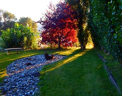 Meditation Garden (starmist1) Tags: cuuf meditationgarden meditate peaceful serene colorful watercourse drystreambed mindfulness walk sit walking sitting grass rocks stone granite basalt standingstones bench poplar trees plums cherry wind sun shade watersound splash moving growing process contemplation