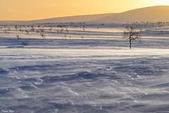 Eternal wind (Thomas Kast) Tags: winter snow ice nature finland landscape wind arctic lapland thomaskast salamapaja