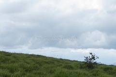 Valle de Mena (23) (cynefin_) Tags: httpcargocollectivecomcynefin valle de mena merindades burgos castilla y len villasana cynefin paisaje naturaleza