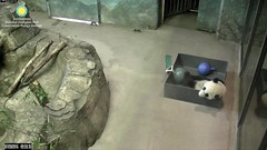2016_07-20e (gkoo19681) Tags: nationalzoo sohappy stealing meixiang beibei unfortunateevents sharingiscaring yummyapple ccncby