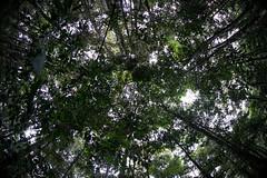 Guilherme.Gnipper-0354 (guilherme gnipper) Tags: picodaneblina yaripo yanomami expedio expedition cume montanha mountain wild rainforest amazonas amazonia amazon brazil indigenous indigena people