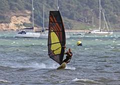 Aug0309a (Mike Millard) Tags: hamworthypark pooleharbour windsurfers