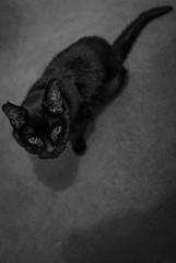 2016_203 (Chilanga Cement) Tags: fuji fujix100t x100t xseries x100s x100 cat bw blackandwhite shadows shadow tail