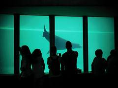under the surface (Csenge Bujdos) Tags: seal zoo animal blue green people silhouette