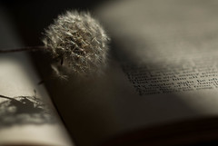 Summer Poetry (Captured Heart) Tags: dandelionseeds dandelion wishes book poetry text words pages lightandshadows