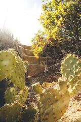 (Melissa Emmons Photography) Tags: malibu canon california canon5d coastal cliffs coastline summertime palosverdes losangeles rocks tidepools foam sunset rock hut camp loveofmylife ocean nature neverstopexploring landscape cactus silhouette