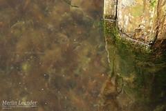 DSC_1191 (Tiny Cactus Photography) Tags: ruegen island summer nature sea germay