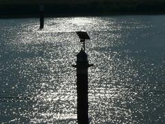 River Ems (achatphoenix) Tags: water wasser eau aqua eastfrisia unterwegs ostfriesland ontour inpassing enroute h2o gegenlicht backlight