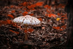 Meeting in the woods (kiv_lusko) Tags: flickr floral forest beauty beautiful color flower natural nature wood mushroom nikon