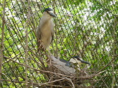 P2230381 (Gareth's Pix) Tags: aviarionacionaldecolombia baru colombia aviario bird