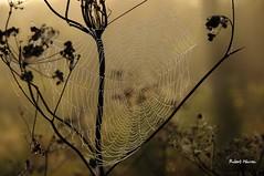 Une toile aux couleurs de l'automne... / Nature's art in fall... (Pentax_clic) Tags: imgp7252 octobre 2016 automne fall brume brouillard robert warren vaudreuil quebec pentax toile araigne kr